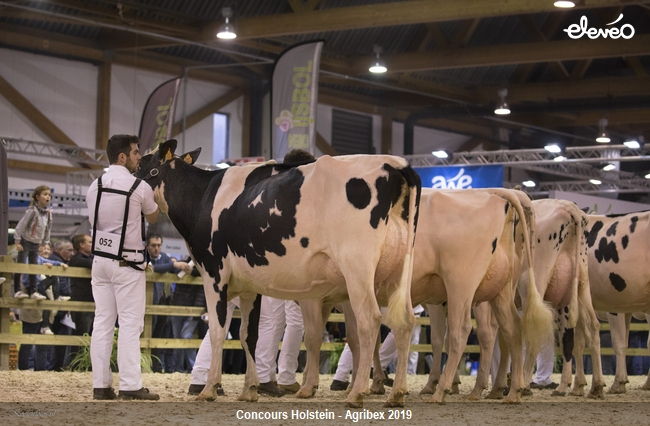 Retour sur les moments forts du concours Holstein d\'Agribex!
